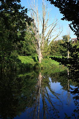 Photograph - Tree Reflections by Aidan Moran