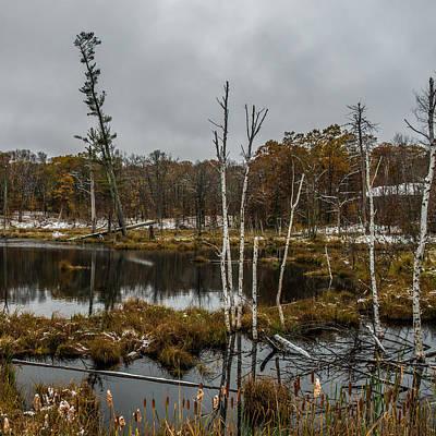 Sumac Tree Photograph - Tree Reflections By Paul Freidlund by Paul Freidlund