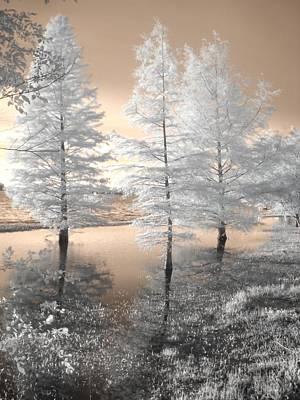 Infared Photograph - Tree Reflections by Jane Linders