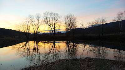 Photograph - Tree Reflections Landscape by Mike Breau