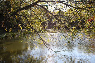 Tree Reflecting Off Lake Art Print by John Telfer