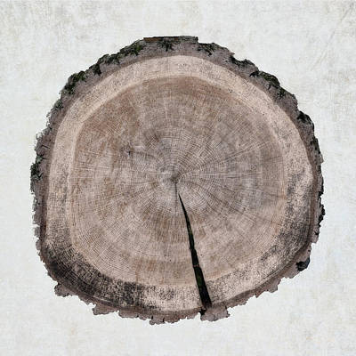 Painting - Tree Rings by Cora Niele