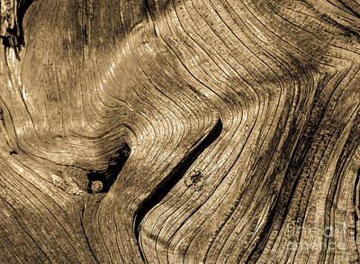 Photograph - Tree Rings by Robert Bales