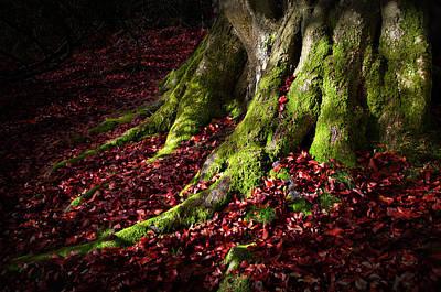 Photograph - Tree Roots Autumn Leaves by Henrik Petersen