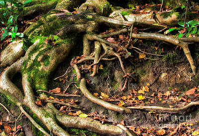 Treeroots Photograph - Tree Roots Escaping by Simon Bratt Photography LRPS