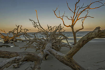 Photograph - Tree Roots Exposed At Sunset On Jekyll Island by Willie Harper