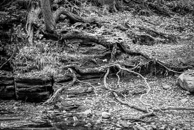 Photograph - Tree Roots George W Childs National Park Painted Bw   by Rich Franco