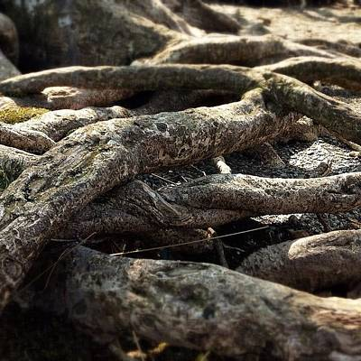 Abstract Landscape Wall Art - Photograph - Tree Roots  by Sean Cahill