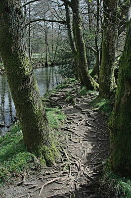 Lakedistrict Photograph - Tree Route Pathway by Kathy Spall