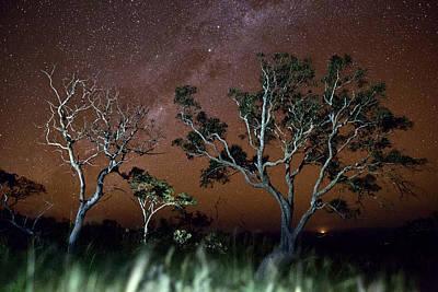 Tree Savanna On The Serrania De Chiquitos Bolivia Art Print by Dirk Ercken