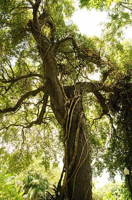 Tree Scape Art Print