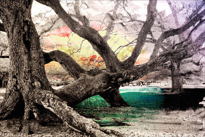 Photograph - Tree Series 01 by Carlos Diaz