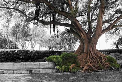 Photograph - Tree Series 25 by Carlos Diaz