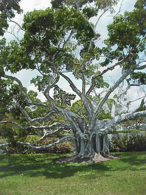 Photograph - Tree Series 26 by Carlos Diaz