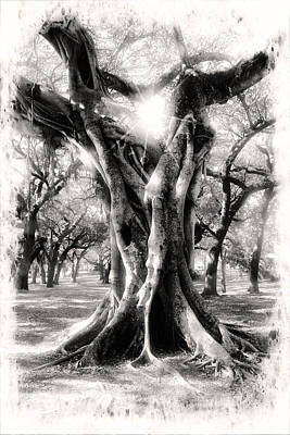 Photograph - Tree Series 28 by Carlos Diaz