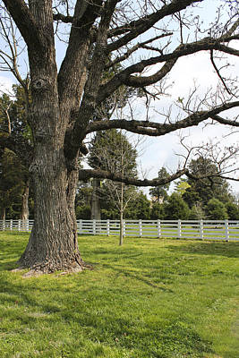 Photograph - Tree Series 36 by Carlos Diaz