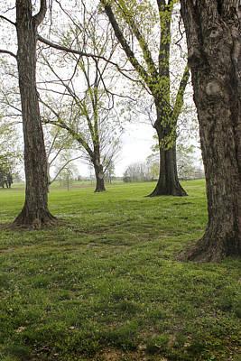 Photograph - Tree Series 37 by Carlos Diaz