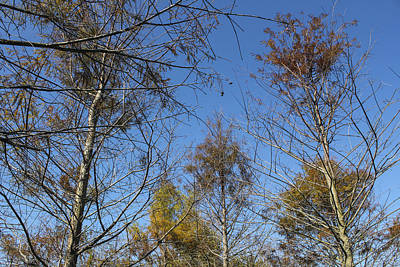 Photograph - Tree Series 39 by Carlos Diaz
