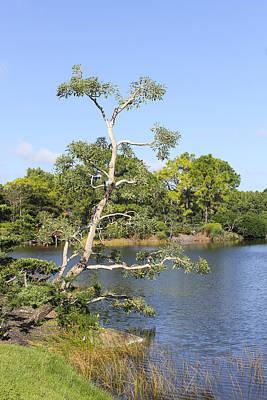 Photograph - Tree Series 43 by Carlos Diaz