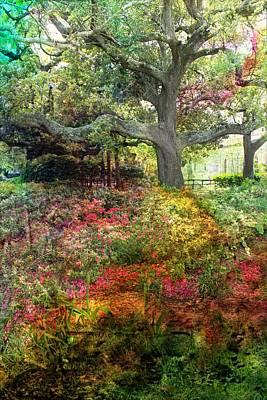 Photograph - Tree Series 47 by Carlos Diaz