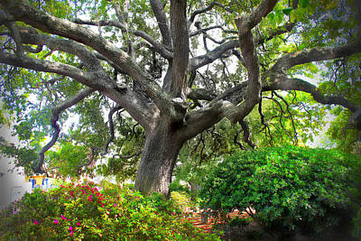Photograph - Tree Series 48 by Carlos Diaz