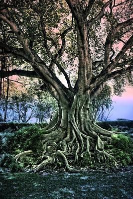 Photograph - Tree Series 49 by Carlos Diaz