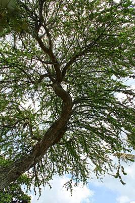 Photograph - Tree Series 50 by Carlos Diaz