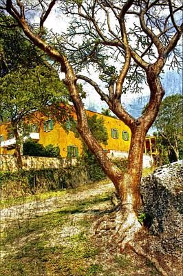 Photograph - Tree Series 53 by Carlos Diaz