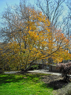 Photograph - Tree Series 55 by Carlos Diaz