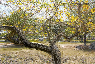 Photograph - Tree Series 58 by Carlos Diaz