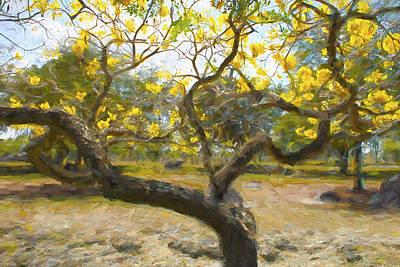 Photograph - Tree Series 60 by Carlos Diaz