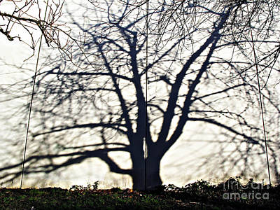 Photograph - Tree Shadow by Ethna Gillespie