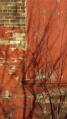 Photograph - Tree Shadow On Brick 5 by Anita Burgermeister