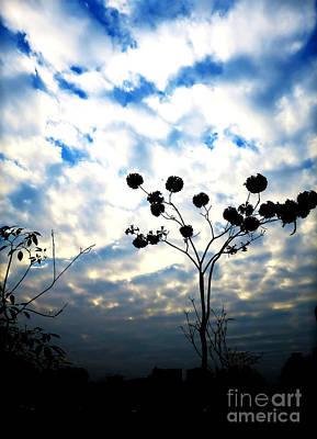 Pyrography - Tree Shadows by Champion Chiang