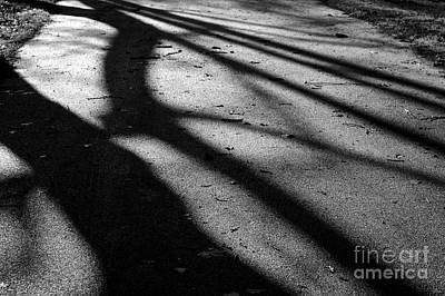 Tree Shadows Art Print by Paul Muscat