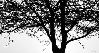 Photograph - Tree Shadows by Tony Grider