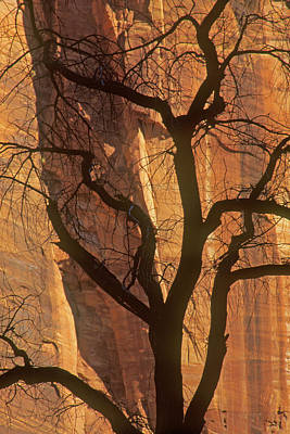 Photograph - Tree Silhouette Against Sandstone Walls by Judi Baker