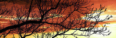 Bare Trees Photograph - Tree Silhouette At Sunset, Warner by Panoramic Images
