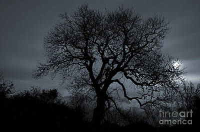 Tree Silhouette Art Print by Ian Mitchell