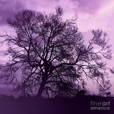 Tree Silhouette In Purple Art Print by Phill Petrovic