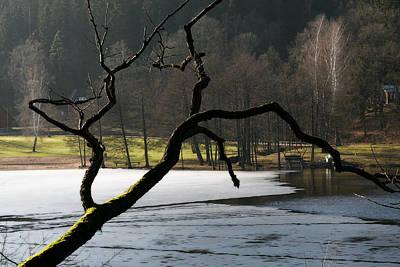 Tree Silhouette Original by Jessica Velasco