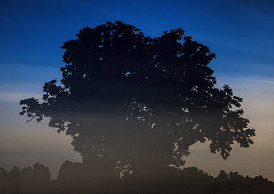 Photograph - Tree Silhouette by John Crothers