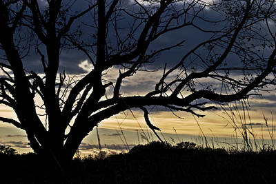 Photograph - Tree Silhouette by Mark Russell