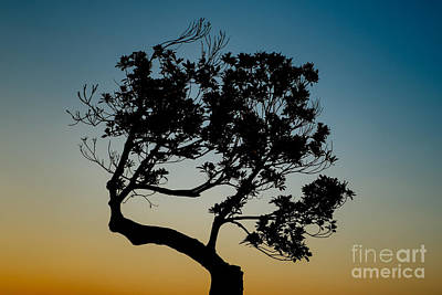 Photograph - Tree Silhouetted Against The Setting Sun by Dean Harte