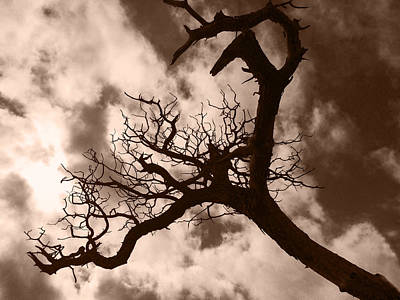 Photograph - Tree Silhouetted by Alina  Oswald