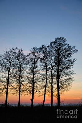 Photograph - Tree Silhouettes by Kennerth and Birgitta Kullman