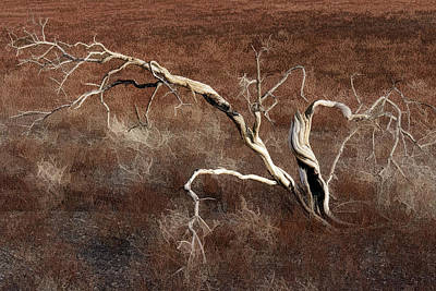 Photograph - Tree Skeleton by Wes and Dotty Weber