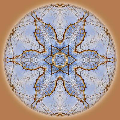 Photograph - Tree Sky Flower Mandala by Beth Sawickie