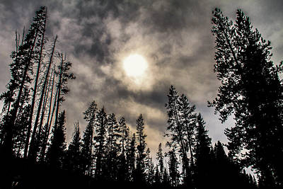 Rocky Mountain National Park Photograph - Tree Skyline by Juli Ellen