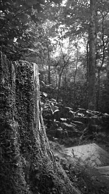 Photograph - Tree Stump In A Forest In Black And White by Kelly Hazel